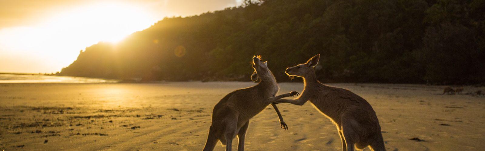 Australian Wildlife Adventure